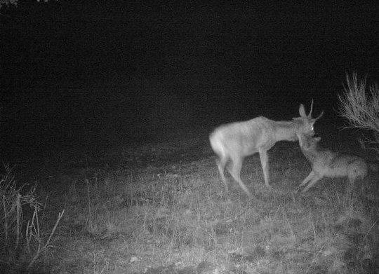 Hunting-camera
