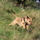 Lederen beloningszakje voor hondenkoekjes - AKAH_11