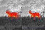ZEISS DTI 3/35 Warmtebeeld handkijker_11