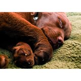Pro-Thermo Honden mat_11