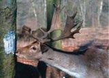 Zoutpasta truffel emmer _11