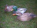 Featherlites-Fusion-Series-Ducks--(6-stuks)